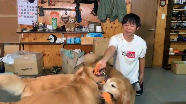 遊ぶ人と犬