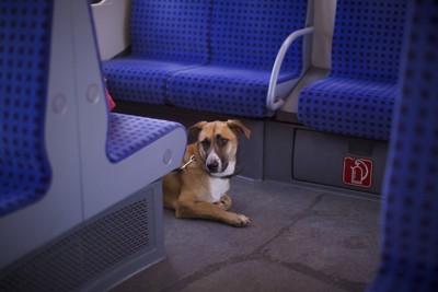 列車の中で床に伏せる犬