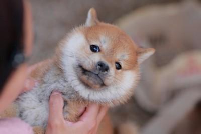 抱っこを嫌がる子犬