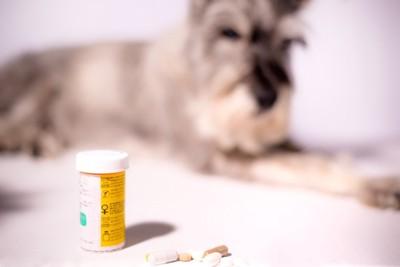 薬の瓶とシニアのシュナウザー