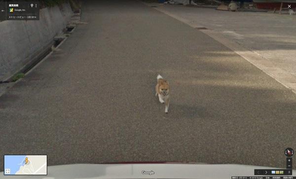 ストリートビューカーを追いかける柴犬