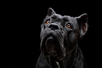 見上げる黒い犬