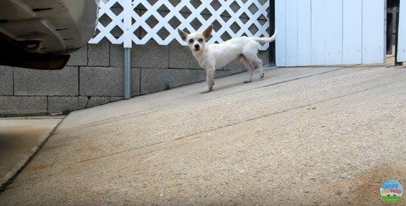 後ろ足を浮かせる犬