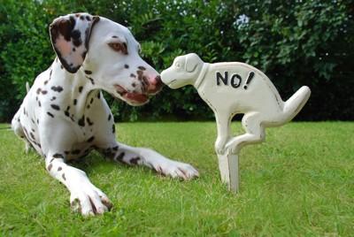 フン禁止看板と犬