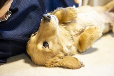 仰向けの姿勢の犬