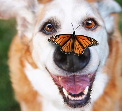 鼻に蝶がとまっている犬のアップ