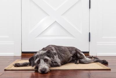 扉の前で飼い主を待つ犬