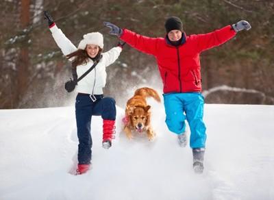 雪の中で遊ぶカップルと犬