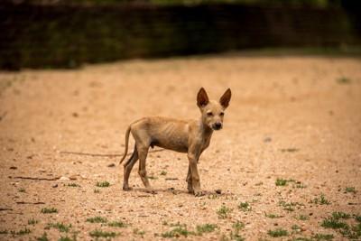 野生の茶色い子犬