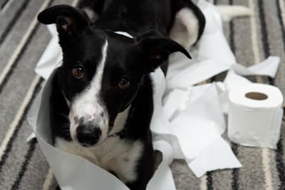 トイレットペーパーまみれの犬