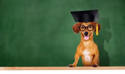 黒板の前の犬