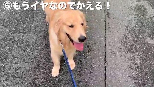 6もうイヤ~字幕