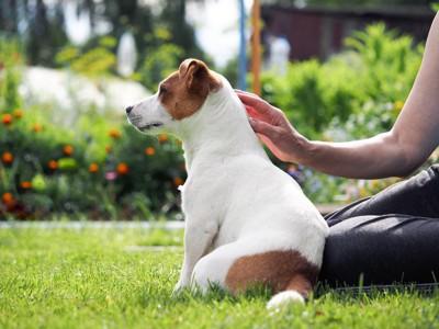 膝にお尻を付ける犬