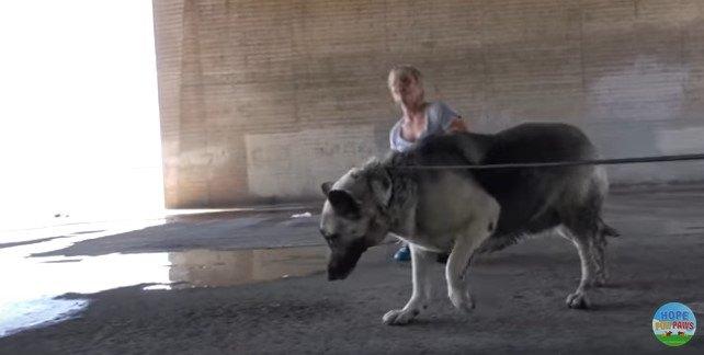 逃げたい犬