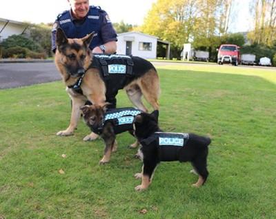 男性と警察犬と2頭の子犬