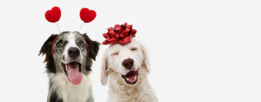 寄り添って笑顔のカップルの犬
