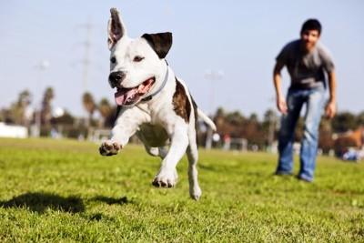 うれしそうに走る犬