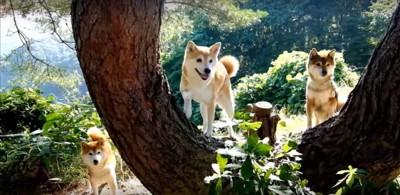 木に登るいちごちゃん