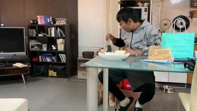 食べ物見る犬