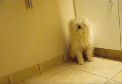 隅で警戒する犬