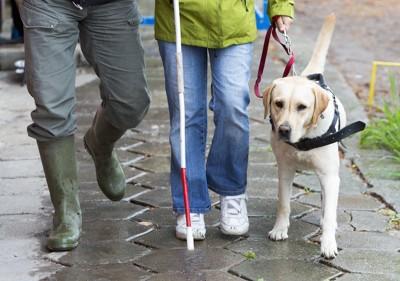 ハンドラーと歩いている盲導犬