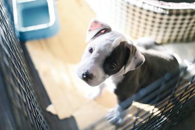 ケージの中から上を見つめる犬