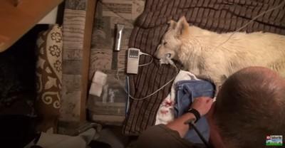 処置を受ける犬