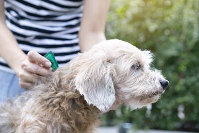 スポット薬を投与される犬
