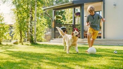 庭でサッカーをする男の子と犬