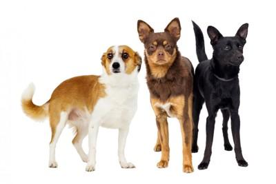 3頭の違う毛色の犬たち