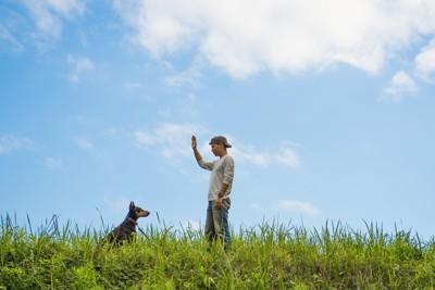 キャップをかぶっている飼い主さんとお坐りする大型犬