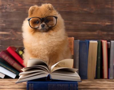 メガネをかけたポメラニアンと本