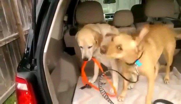 オレンジのリードを咥える犬