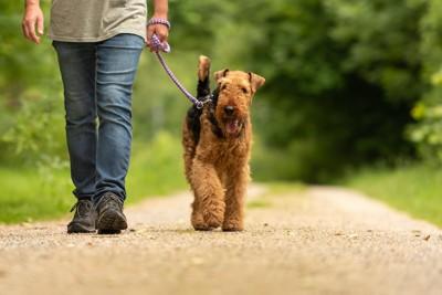 短いリードで散歩をする犬