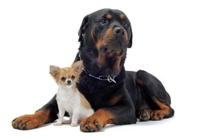 小型犬と大型犬