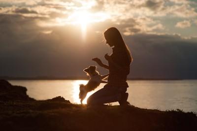 夕日の中で女性に前足をタッチするチワワ