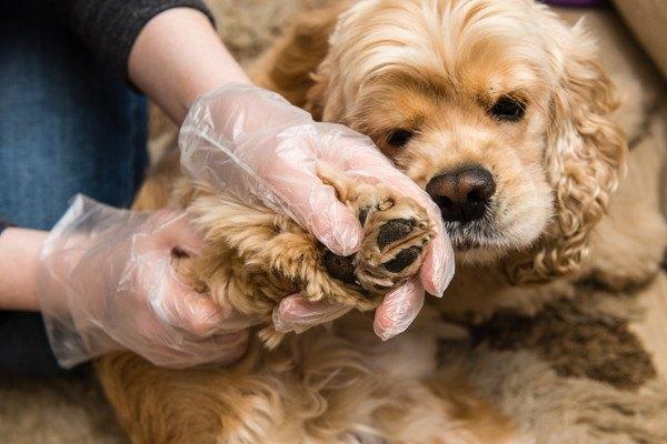 前足を触られる犬