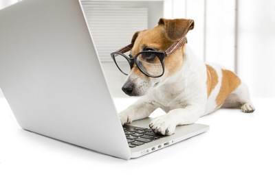 メガネをかけてパソコンを見る犬
