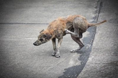 全身が脱毛している犬