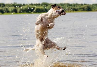 川 おもちゃ 犬