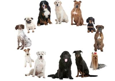 さまざまな種類の犬