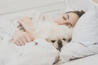 抱きしめられながら布団で寝るペキニーズ