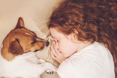 眠っている犬と女の子