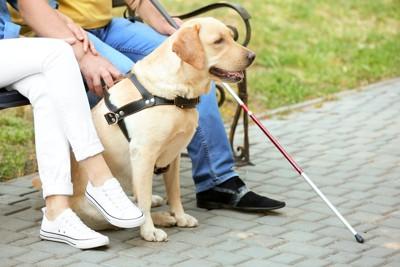 ベンチに座る人と盲導犬