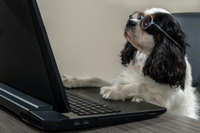 メガネをかけてパソコンを見つめる犬