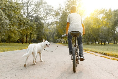 犬と自転車で散歩