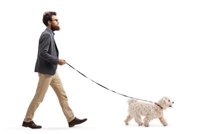 リードをつけて散歩する犬と男性