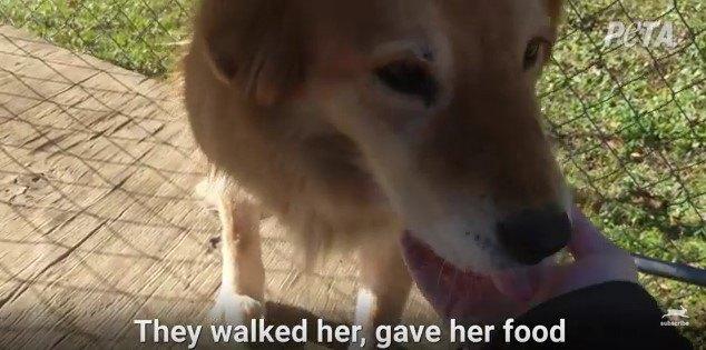 訪問者の手をなめる犬
