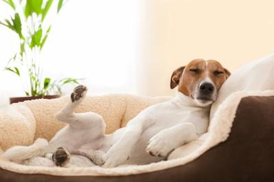 犬用ベッドで足を上げて寝る犬