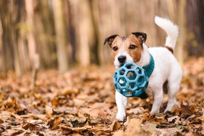 青いオモチャを咥える犬